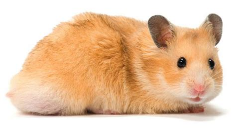 Your New Small Animal