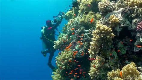Scuba Diving The Red Sea (Egypt) For Scuba Divers