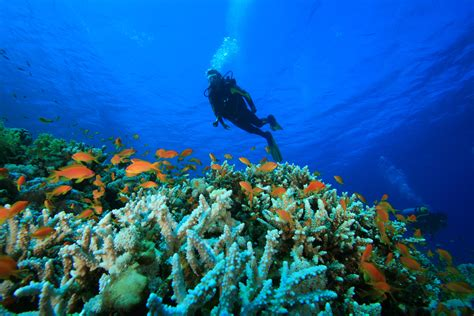 Dive into the Deep! Best Scuba Diving Destinations in