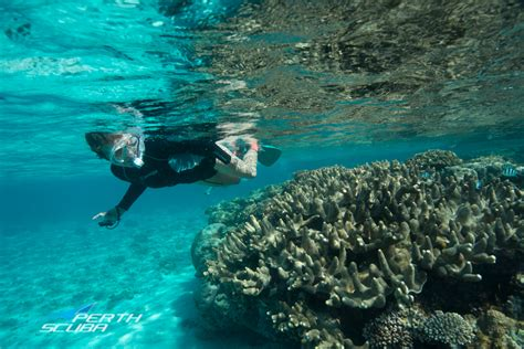 Ningaloo Dive, Snorkel & Sail Safari Perth Scuba