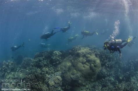 diving Foto di Ningaloo Reef Dive, Coral Bay TripAdvisor