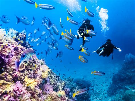 Diving an exciting activity in Cambodia Cambodia Tours