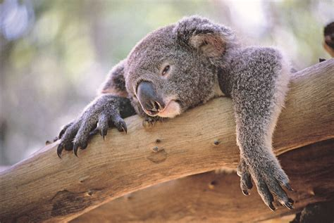 Australia Facing 'Extinction Calamity' for Native Animals