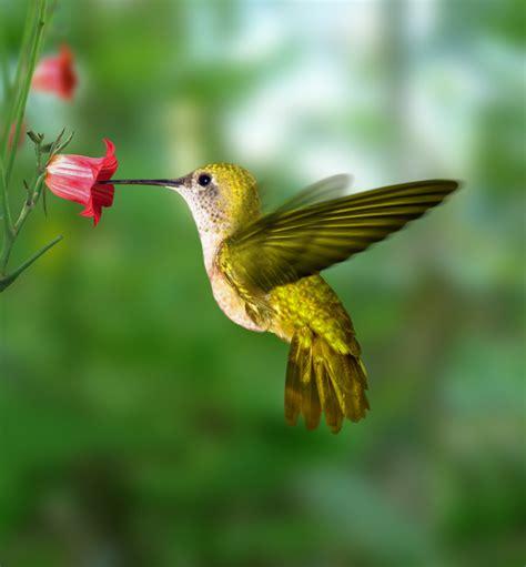 Hummingbirds XciteFunnet