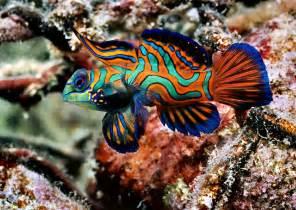 Salt water fish Aquarium Fish Exotic Fish