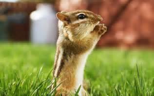 Beautiful Animals Wallpapers HD Desktop Widescreen Free Download