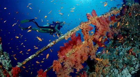 Diving holidays in Egypt (Red Sea) Regaldive The