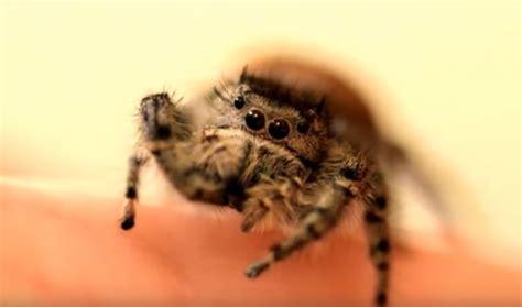 Petting a Pet Spider Neatorama