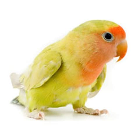 Index of /cdn/freeteacher/images/pet animals