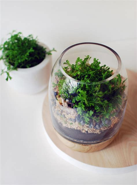 How to Make Terrarium: 18 Great DIY Ideas Style Motivation