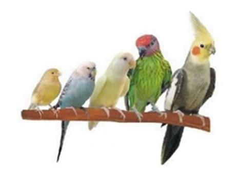 Domestic birds list