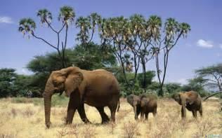Free Download Animal Wallpaper Pack elephants