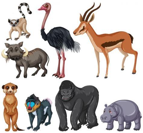 Different kind of wildlife animals illustration Vector
