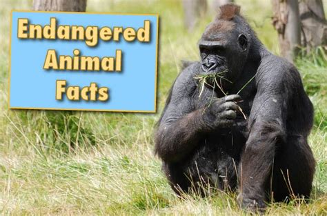 Amazing Facts About Animals With Pictures For Kids