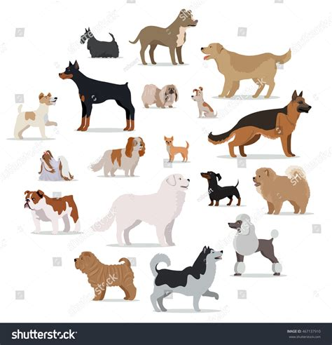 Dogs Breed Set Isolated On White Stock Vector 467137910 Shutterstock