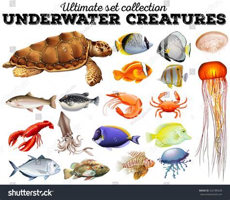 Different Kind Sea Animals Illustration Stock Vector