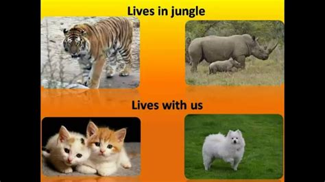 CBSE Science Different types of Animals in English