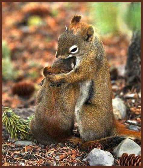 216 best Pinterest Squirrels images on Pinterest