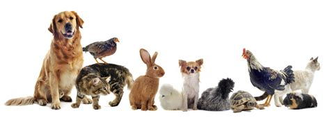 16 Weird Animal Names in English Language Connections Blog