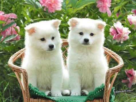 Doggies Of The World