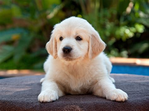 Can a Puppy Supplement Harm My Growing Dog?