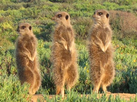 South Africa Wild Animals South Africa Pictures of