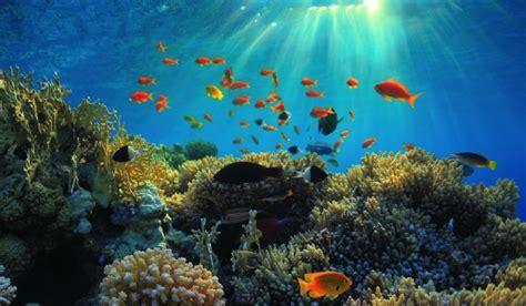 About Scuba Diving Egypt