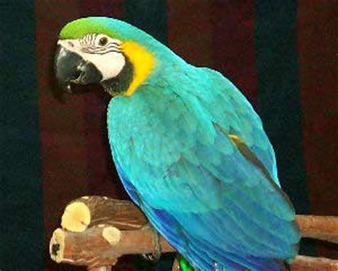 Bird Information, Types of Birds and Choosing a Pet Bird