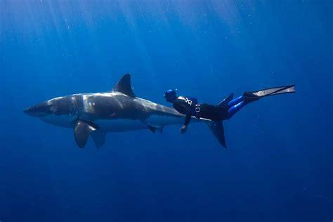 Debunking sharks bad reputation Framework Photos and
