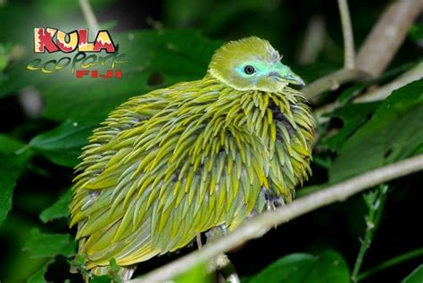 Kula Wild Adventure Park The official website of Tourism