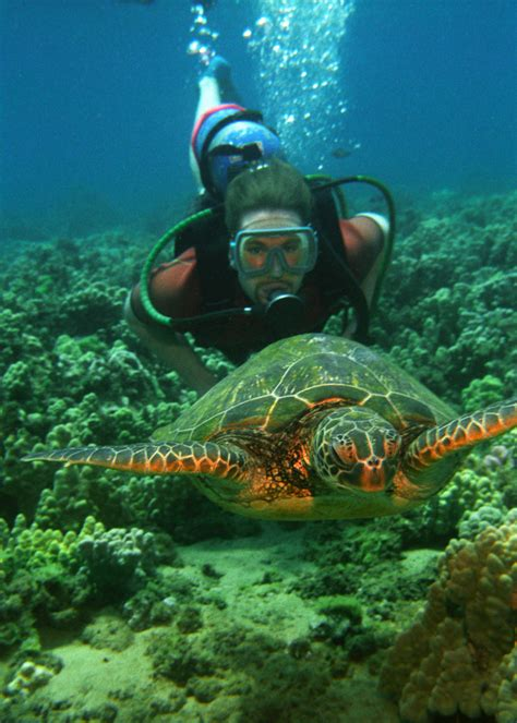 Swimming with Sea Turtles in Hawaii Hawaiian Explorer