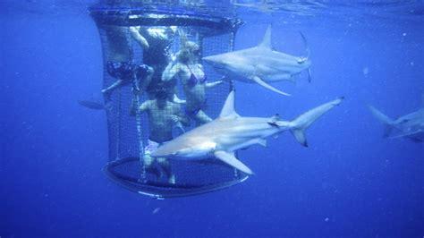 SHARK CAGE DIVING KZN IN DURBAN: Cage Diving KZN December