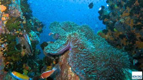 Koh Tao Dive Sites — KOH TAO : a Complete Guide