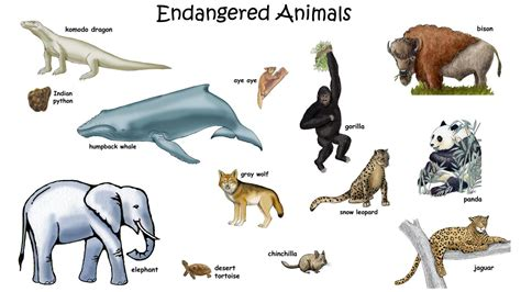Picture of Endangered Animals with Names for Kids HD