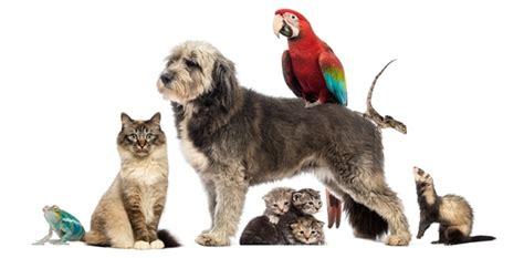 Home DOG, CAT & BIRD CLINIC OF NUTLEY