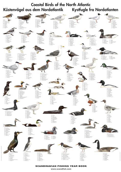 Coastal Birds Poster Unique Poster with Sea Birds