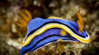 Top 10 Most Colorful Fishes YouTube