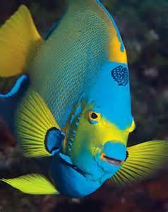 Marine Fish Species