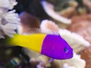 Make Your Home Bright with Marine Aquarium Fish Aquarium Design Ideas