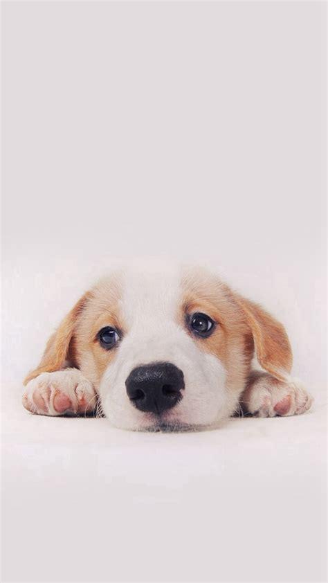 Cute Puppy Dog Pet #iPhone #6 #plus #wallpaper iPhone 6