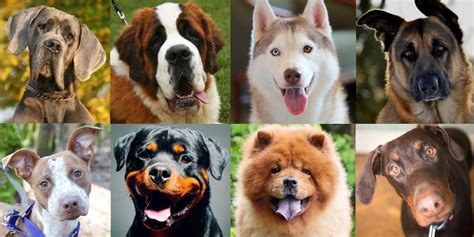 Kentucky Community Bans 11 Different Dog Breeds The