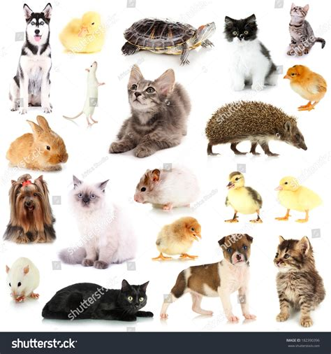 Collage Different Pets Isolated On White Stock Photo 182390396 Shutterstock