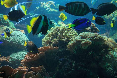 Free Images : nature, ocean, animal, diving, underwater