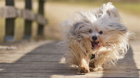 Dog Wallpapers, HD Puppy Wallpaper, Free Dog Wallpapers