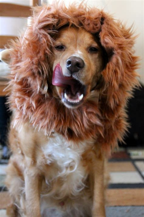 Image Gallery lion s mane wig