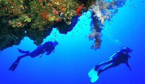 Diving in the Red Sea Jeddah Saudi Arabia best dive sites