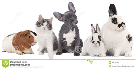 Group of different pets stock image Image of french 48679263
