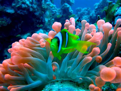 Best Scuba Diving Spots in the World Roomer Blog