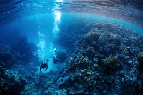 Scuba Diving in the Southern Red Sea, Egypt Dive The