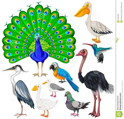 Différents Types D'oiseaux Sauvages Illustration de